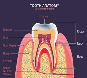 This Genius Method will Grow Back Tooth Enamel Naturally Enamel-300x271